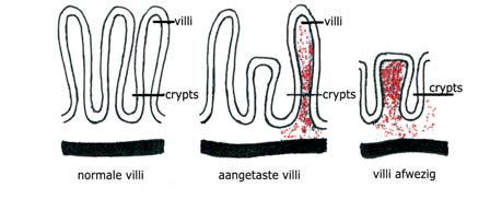 Nucleotiden repareren darmvilli