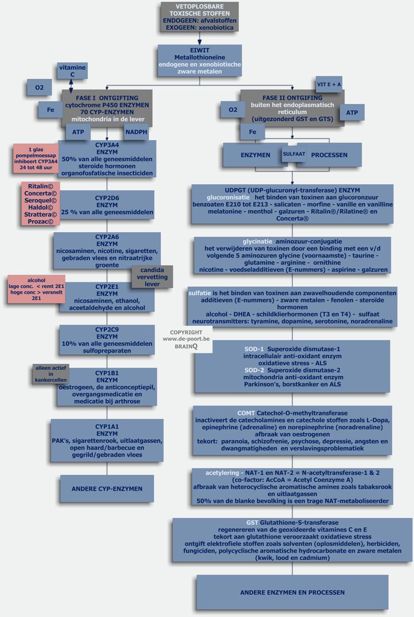 orthomoleculaire geneeskunde kwakzalverij
