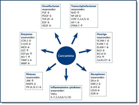 figuur-2-invloed-van-curcumine-op-regulatiemoleculen